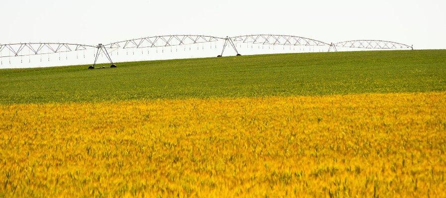 Riego para diferentes tipos de cultivos